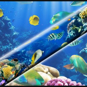 Ocean Reef Tropical Fish
